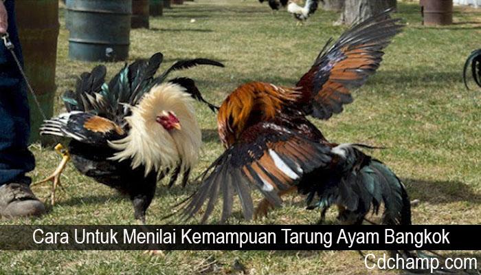 Cara Untuk Menilai Kemampuan Tarung Ayam Bangkok