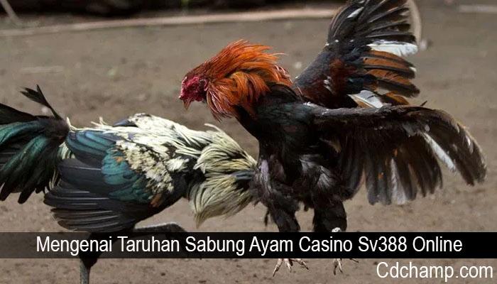 Mengenai Taruhan Sabung Ayam Casino Sv388 Online
