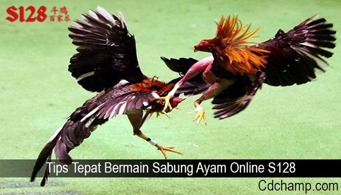 Tips Tepat Bermain Sabung Ayam Online S128